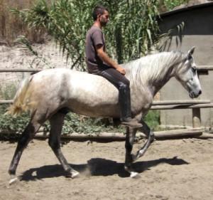 Andalusierpferde